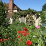 Cottage Garden Poppies